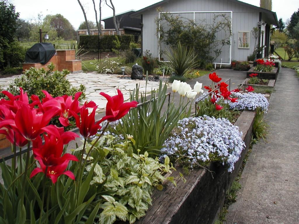 lovin h tulips