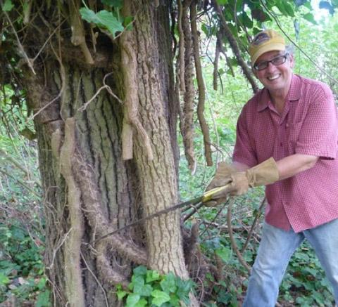 giant-ivy