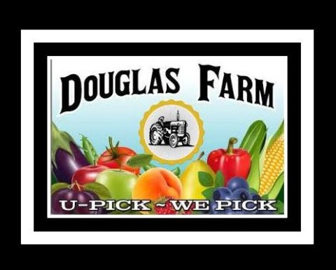 Douglas Farm is a 4th generation family farm specializing in U-PICK fruit & vegetables. We pride ourselves on growing and selling the best in farm fresh produce. Bring your family and pick from our various fruit orchards(Peaches, Apples, Pears & Prunes) or from our Berry & Veggie Fields.